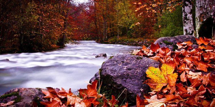 Germany in Autumn Germany in Autumn Fall Color River Leaves Orange Flickr