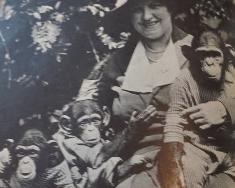 Gertrude Lintz The Crazy Chimp Lady of Shore Road Hey Ridge
