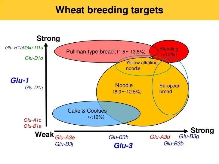 Glutenin Comparison of glutenin subunit composition among Australian and North