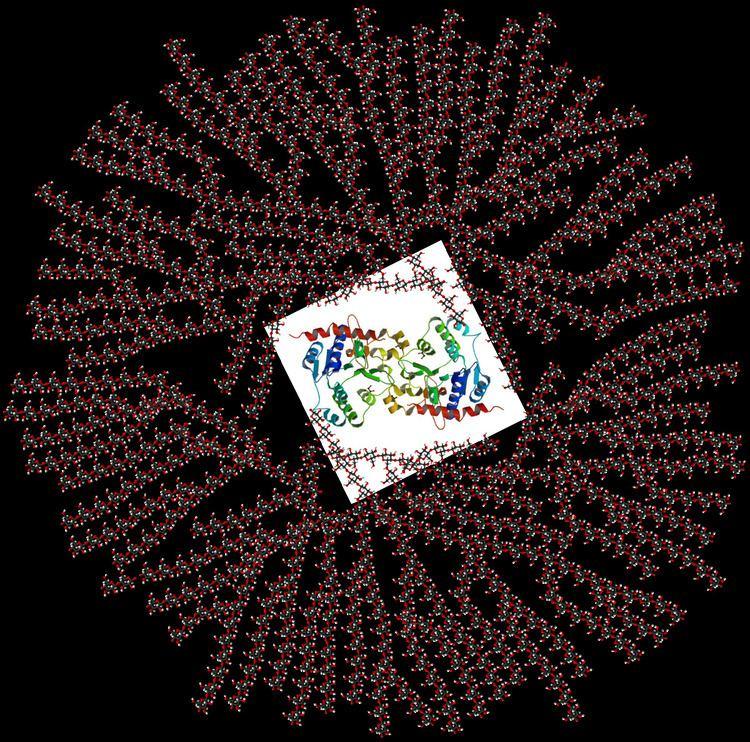 Glycogen Glycogen Wikipedia