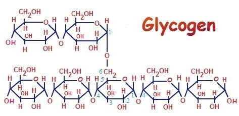 Glycogen Is Glycogen a Carbohydrate I Love Bicycling