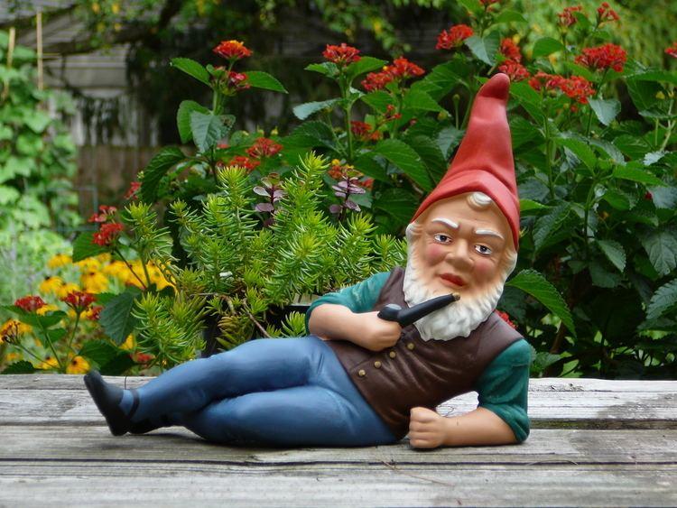 Gnome Garden gnome Wikipedia