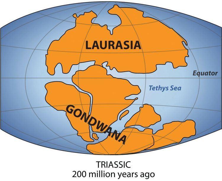 Gondwana 350millionyearold former inhabitant of Gondwana found