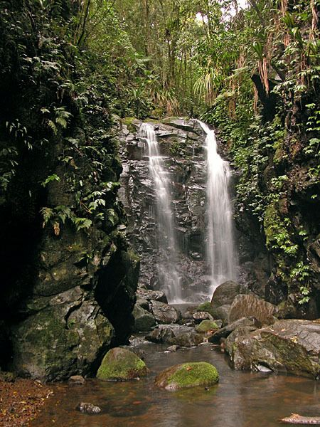 Gondwana Rainforests Gondwana Rainforests Wikipedia