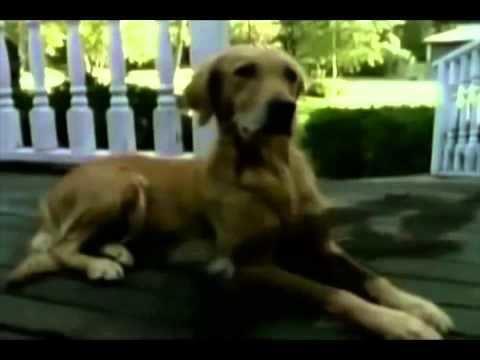 Goosebumps (TV series) Goosebumps Full Intro YouTube