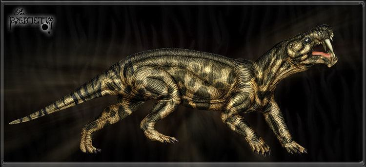 Gorgonops Gorgonops Facts and Pictures