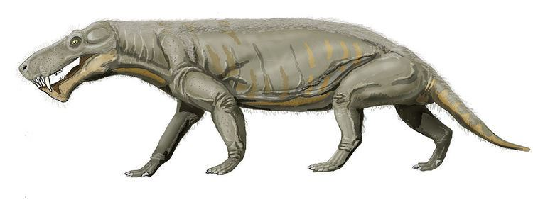 Gorgonops Gorgonops Wikipedia