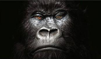 Gorilla (advertisement)