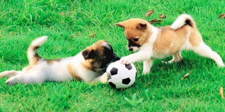 Gossos La moratria de Colau ha donat oxigen al conflicte dels gossos a