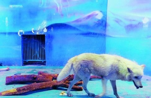 Grandview Mall Aquarium Arctic blues South China mall under fire for new 39polar world