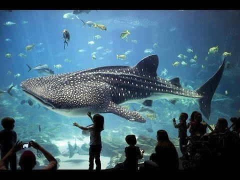 Grandview Mall Aquarium Big aquarium at Grandview Mall Guangzhou YouTube