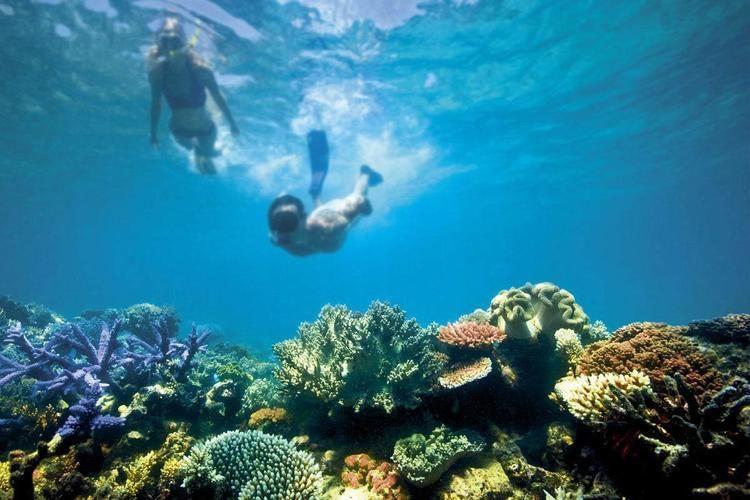 Great Barrier Reef wwwgreatbarrierreeforgwpcontentthemesgreatba