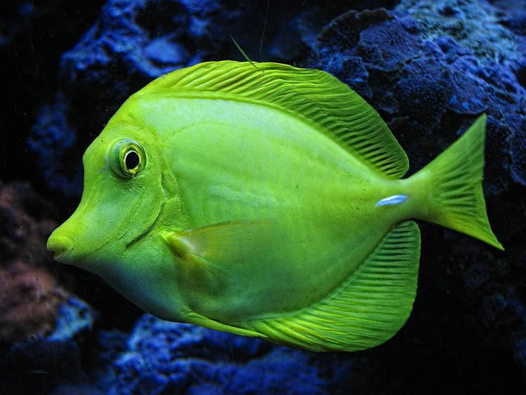 Green Fish Green Fish Photograph Green Fish Fine Art Print Our New Home