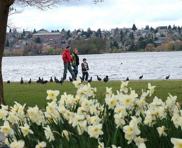 Green Lake, Seattle httpswwwseattlegovimagesDepartmentsParksAn