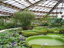 Greenhouse httpsuploadwikimediaorgwikipediacommonsthu