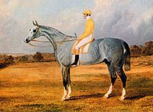 Grey Momus httpsuploadwikimediaorgwikipediacommonsthu