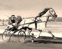 Greyhound (horse) httpsuploadwikimediaorgwikipediacommonsthu