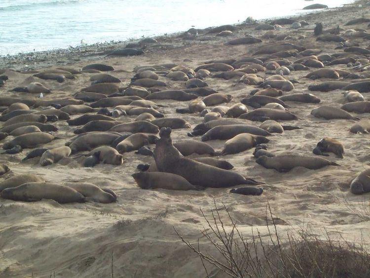 Greyhound Rock State Marine Conservation Area