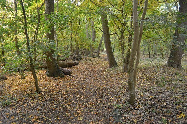 Grimeshaw Wood