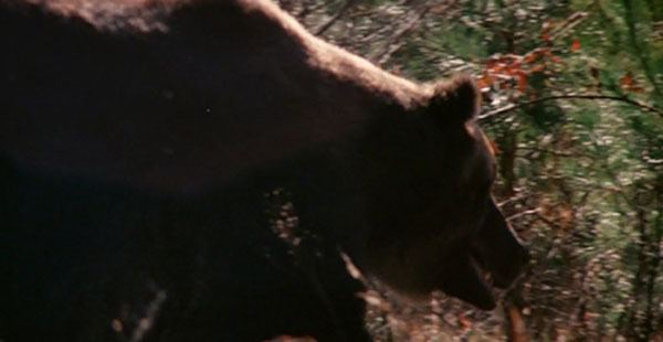 Grizzly (1976 film) movie scenes grizzly 1976 grizzly bear