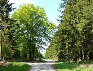 Großer Ahrensberg httpsuploadwikimediaorgwikipediacommonsthu