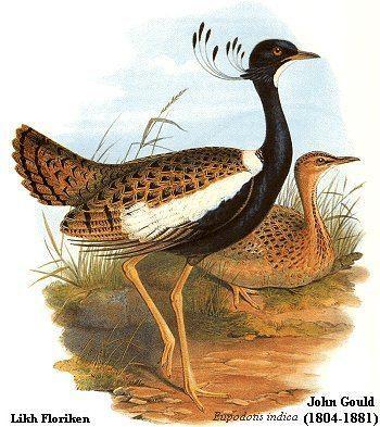 Gruiformes The Earthlife Web The Gruiformes Cranes and their relatives
