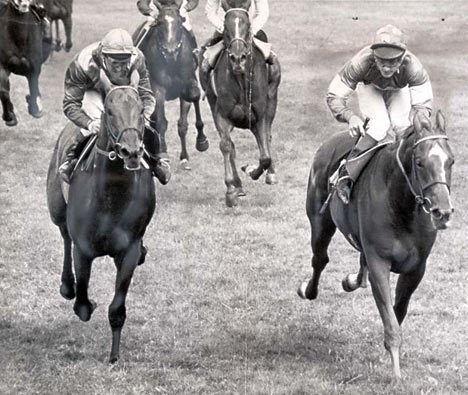 Grundy (horse) idailymailcoukipix20070502grundyDM468x39