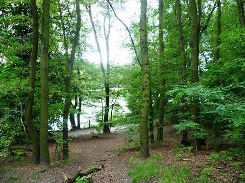 Grunewald (forest) In the Grunewald Forest Berlin Under a Grey Sky