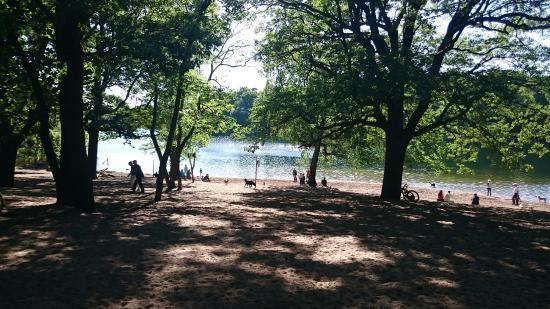 Grunewald (forest) Dog beach in Grunewald park Picture of Grunewald Forest Berlin