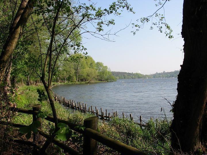 Grunewald (forest) httpsuploadwikimediaorgwikipediacommonsaa