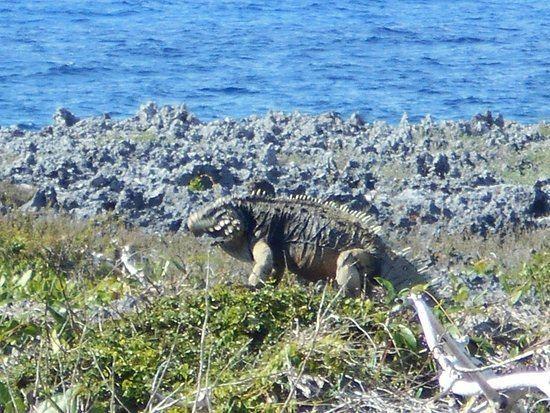 Guanahacabibes Peninsula httpsmediacdntripadvisorcommediaphotos0c