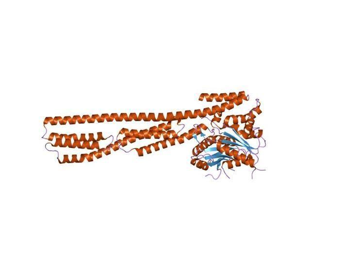 Guanylate-binding protein