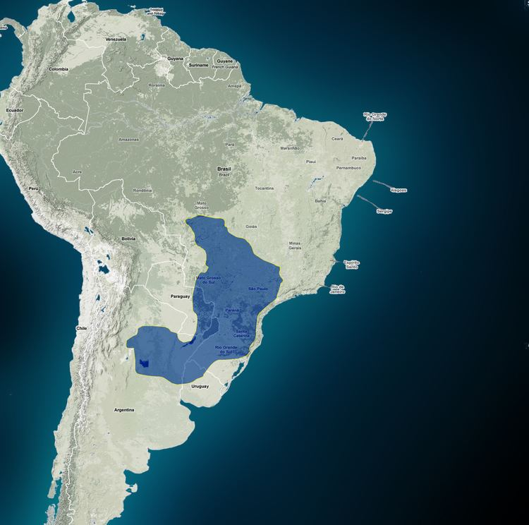 Guarani Aquifer httpsannalisabrambillafileswordpresscom2011