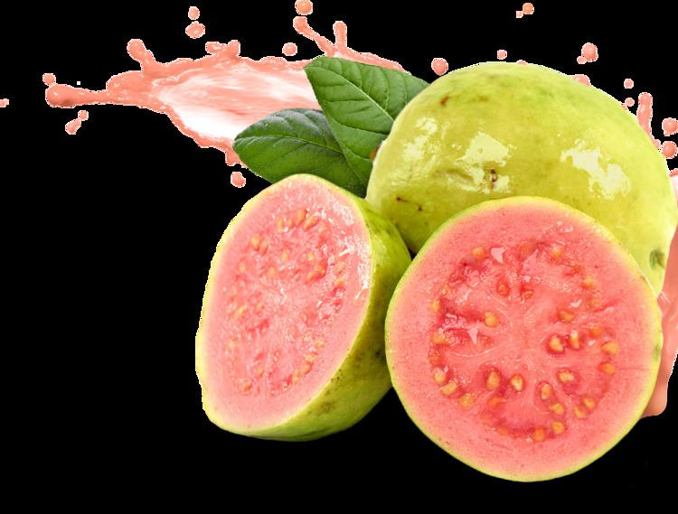 Guava 12 Discovered Amazing Health Benefits of Guava VetBest Health
