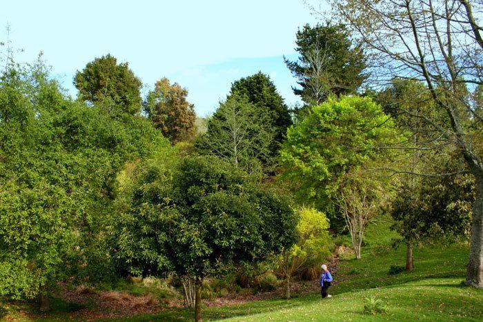 Hackfalls Arboretum Hackfalls Arboretum Tiniroto Gisborne