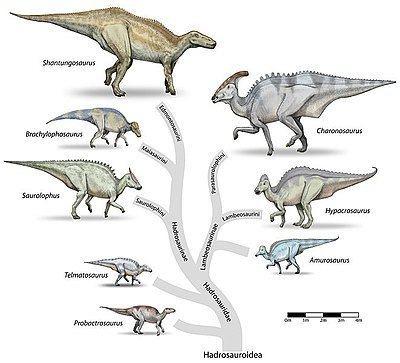 Hadrosaurid Hadrosaurid Wikipedia