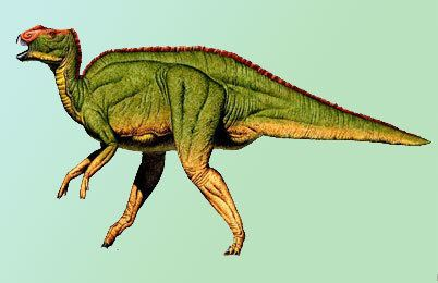 Hadrosaurus Hadrosaurus Dinosaur information facts Dinosaur theories
