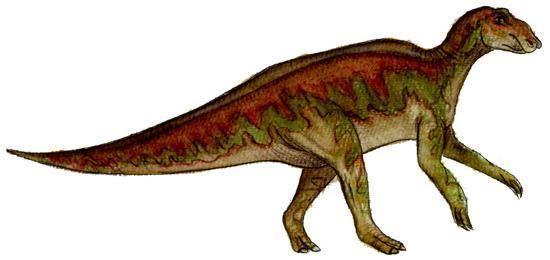Hadrosaurus Hadrosaurus Dinosaur Facts information about the dinosaur hadrosaurus