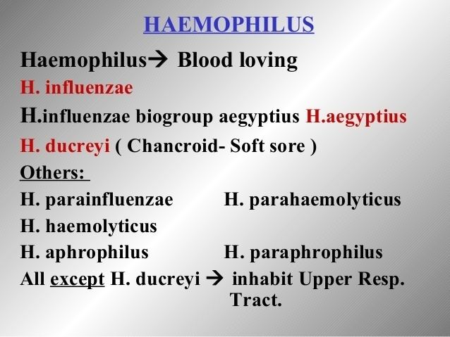 Haemophilus --all sps