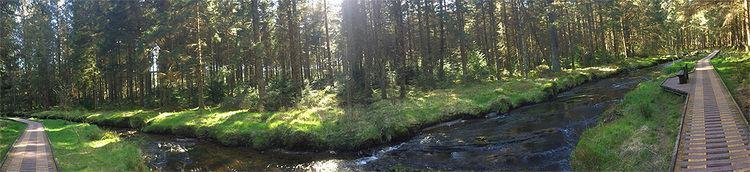 Hafren Forest wwwllanidloescomgifshafrenforest4jpg