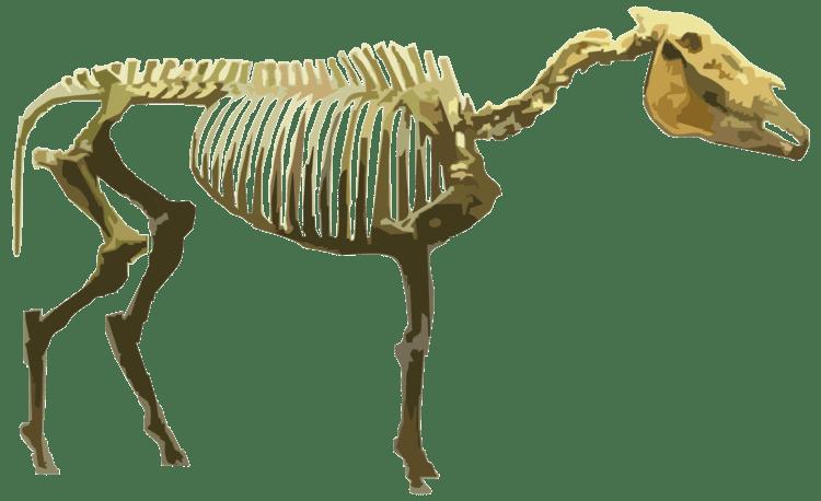 Hagerman horse Exhibits