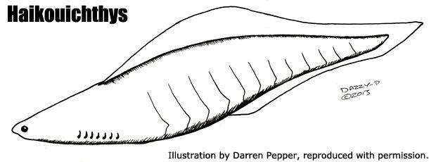 Haikouichthys Haikouichthys