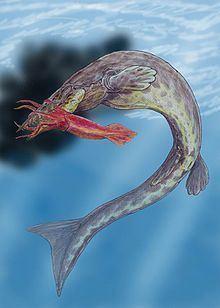 Hainosaurus httpsuploadwikimediaorgwikipediacommonsthu