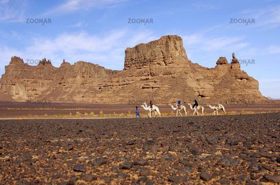 Hamada Photo Caravan in the Hamada desert Image 259780