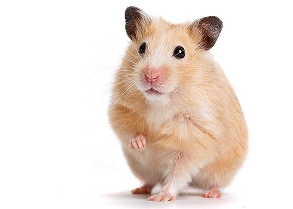 Hamster 2048 Hamster