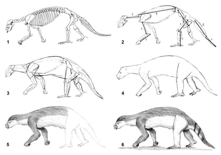 Hapalops Drawing Hapalops by PaleoAeolos on DeviantArt