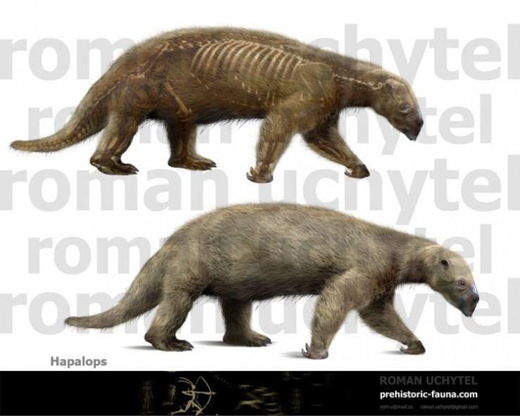 Hapalops prehistoricfaunacomimagecachedatareconstruct