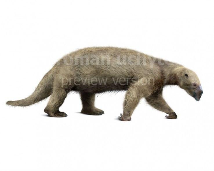 Hapalops sloth Hapalops