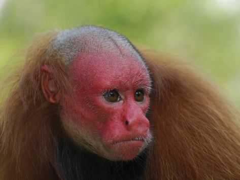 Haplorhini 1000 images about Primates on Pinterest Bohol The thinker and Baboon