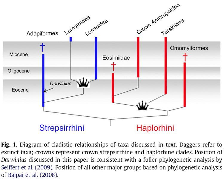 Haplorhini Ida not a missing link Why Evolution Is True